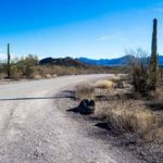 the road in organ pipe national monument