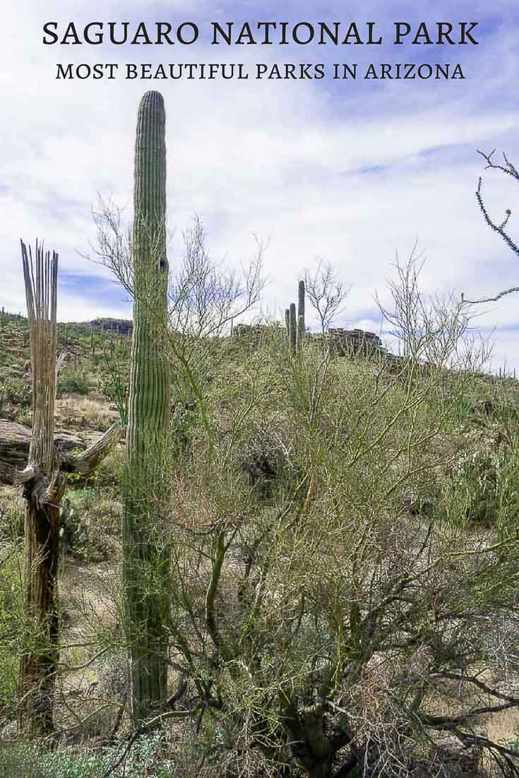 Saguaro National Park in Tucson, AZ is a gorgeous piece of nature filled with rolling hills covered with the nations largest cactus, the giant saguaro!a guide to saguaro national park | national park guide | arizona parks | things to do in saguaro national park | visiting tucson | things to do in tucson | best arizona parks | saguaro cactus | visit saguaro | rincon peak | best desert parks | best national parks