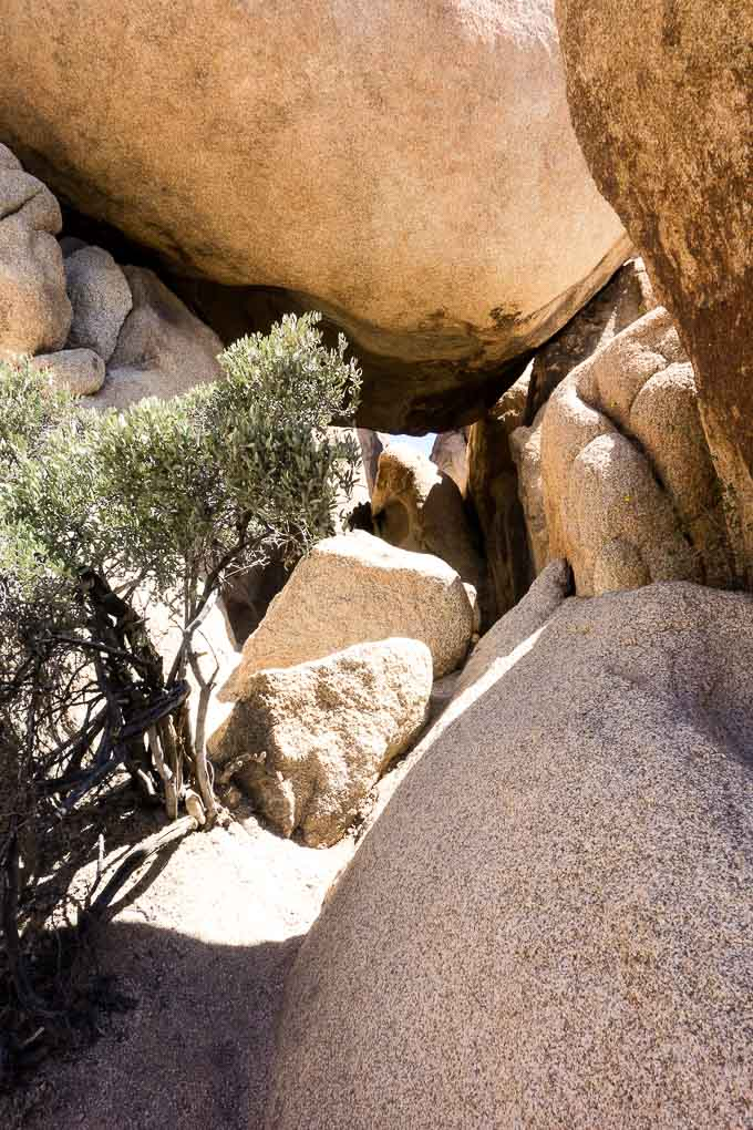 boulders and joshua tree