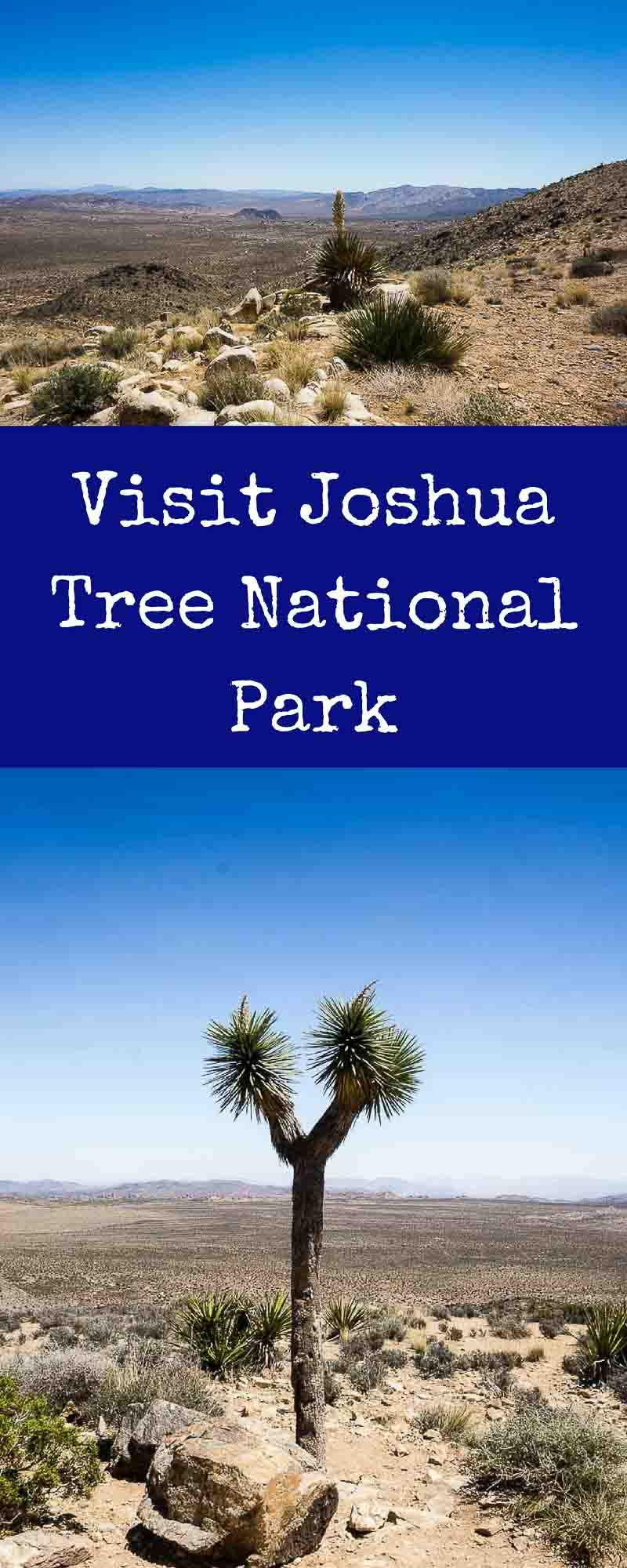 The closest National Park to San Diego and Los Angeles, Joshua Tree National Park is an oasis located in the beautiful high desert area of California. joshua tree travel guide | national parks | desert parks | chollas cactus | joshua trees | most popular national parks | things to do in joshua tree | ryan mountain | hiking in joshua tree | rock climbing in joshua tree