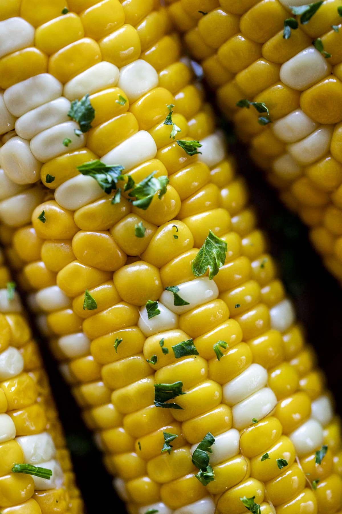 Close up of sous vide corn on the cob.